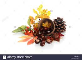 ornamental apples chestnuts fir cones and foliage zier pfel