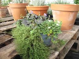 fairy garden plants 013 desert canyon farm green thoughts blog