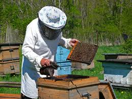 Raising Bees In Backyard by Backyard Beekeeping For Beginners Sustainable Farming Mother