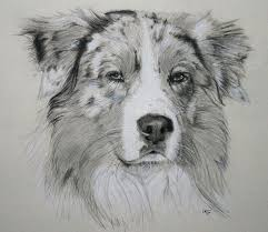 australian shepherd outline australian shepherd smart working dog australian shepherd