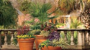 Fall Garden North Texas - 15 tips for great winter pots southern living