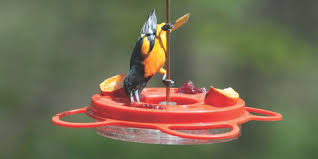get out the bird feeders hummingbirds orioles return to wisconsin