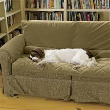 protect sofa from dogs 9446