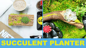 Succulent Planter Diy by Diy Driftwood Succulent Planter Youtube