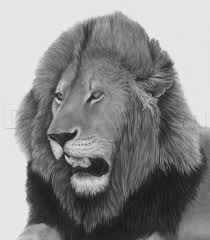 how to sketch a lion head male lion step by step great plain