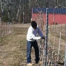 Grape Growing Raccoon Creek Vineyard