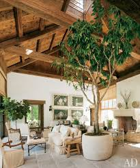 73 best potted trees images on potted trees entry