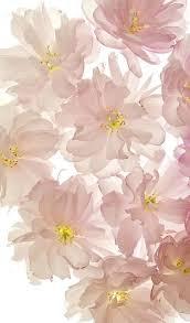 Flower Screen Backgrounds - best 25 cute screen savers ideas on pinterest phone wallpaper