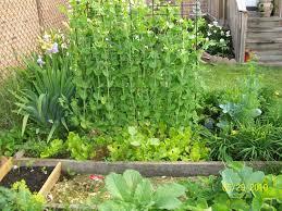 gardening experiments cheryl u0027s garden goodies