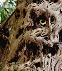the owl in a tree photograph by dug harpster
