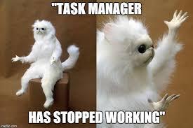 Working Cat Meme - persian cat room guardian meme imgflip