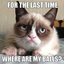 Weird Cat Meme - for the time where are my balls funny cat meme image
