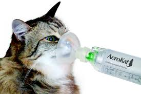 feline asthma chronic bronchitis in your cat
