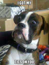 I Got My Eyes On You Meme - i got my eyes on you skeptical dog make a meme