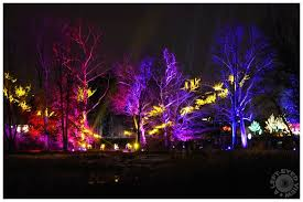 illumination tree lights at the morton arboretum landscape