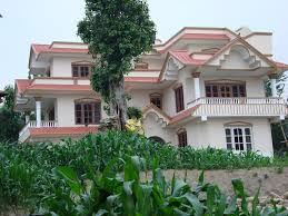 panoramio photo of corn plant near by modern house