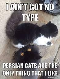 Coco Chanel Meme - persian cat meme cats pinterest coco chanel persian cats and cat
