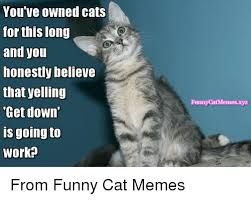 Funny Memes Of Cats - you ve owned cats for this long and you honestly believe that