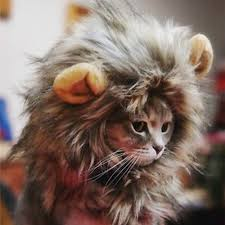 dog costume wizard of oz lion with a wig wig collections