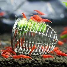 aliexpress buy stainless steel aquarium shrimp small