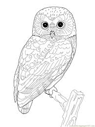 printable owl coloring coloring pages owl birds u003e owl