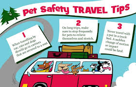 travel safety tips images Pet travel safety tips carolina forest animal clinic jpg