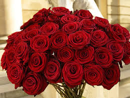 roses for valentines day s day what flowers say i you beccaboo s