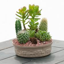 small cactus garden indoor office plants plant type small cactus