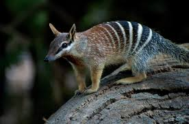 imagenes animales australia animales que solo encontrarás en australia parte 1