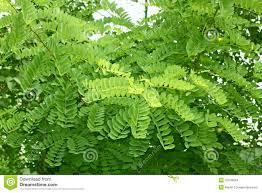 bright green tree shoots stock photo image 54654007