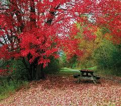 Fall Scents Seasonal Scents