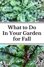 104 best fall gardening images on pinterest gardening tips