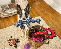 Living With A Blind Dog 7 Rainy Day Games To Play With Your Dog Mnn Mother Nature Network