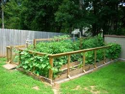 backyard vegetable garden ideas inspiration small backyard