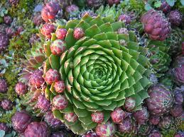 bildresultat för succulent plants pinterest succulents
