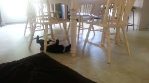 Cat Under Chair Crazy Cat For Licensing Permission To Use Contact Licensing