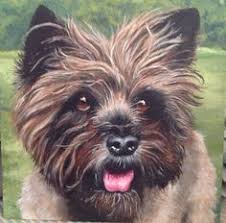 affenpinscher terrier mix pip januari 2017 cairn terrier pinterest more cairn terriers