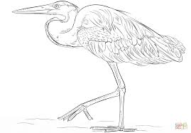 great blue heron coloring page free printable coloring pages