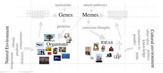 Genes And Memes - another picture of memes serendip studio