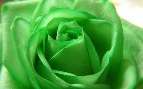 green flower 17355 2560x1600 px hdwallsource com