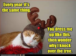 67 best kitty christmas images on pinterest christmas animals