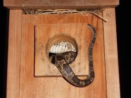 home decor snake attacks my back porch bird house l r wicker design