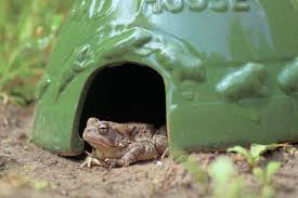 how to attract toads to the garden hgtv