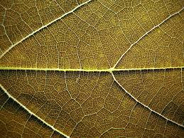 pattern photography pinterest nature pattern photography 4 paul canning fashion photographer