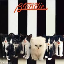 cat photo album classic album covers given a makeover using pictures of kittens