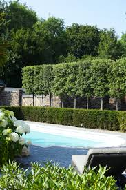 hedge with trees behind for extra privacy gardens u0026 outdoor