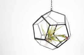 decorating marvelous geometrical small hanging terrarium with