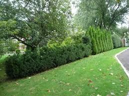 garden shrubs names home outdoor decoration