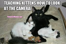 The Best Cat Memes - black cats are the best teachers funny cat meme