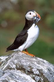wild scotland wildlife and adventure tourism birds seabirds